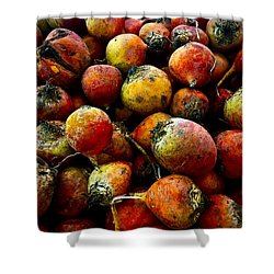 Organic Beets Shower Curtain
