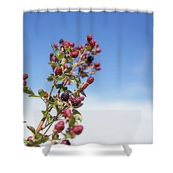Shower Curtain featuring the photograph Organic Handpicked Home Orchard Raspberries,blackberries From Bu by Jingjits Photography