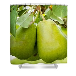 Organic Pears Shower Curtain by Teri Virbickis