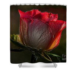 Organic Rose Shower Curtain