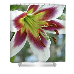 Shower Curtain featuring the photograph Oriental Lily In Summer Sunset by Rebecca Overton