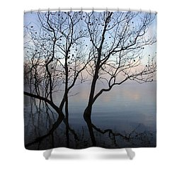 Shower Curtain featuring the photograph Original Dancing Tree by Paula Guttilla