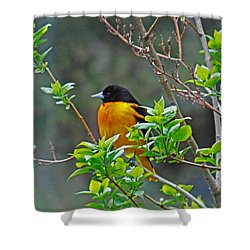 Oriole On The Lilac Shower Curtain by Larry Capra
