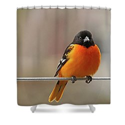 Oriole On The Line Shower Curtain