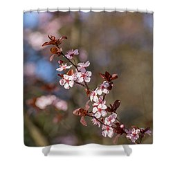 Purple Leaf Sandcherry Blossoms Shower Curtain