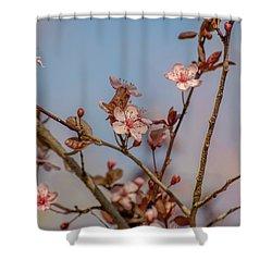 Purple Leaf Sandcherry Blossoms Shower Curtain
