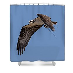 Shower Curtain featuring the photograph Osprey 2017-1 by Thomas Young