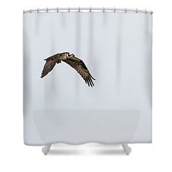 Shower Curtain featuring the photograph Osprey 2017-2 by Thomas Young