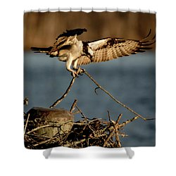 Osprey 2017-3 Shower Curtain