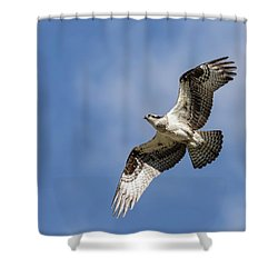 Shower Curtain featuring the photograph Osprey 2017-3 by Thomas Young