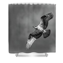 Shower Curtain featuring the photograph Osprey 2017-4 by Thomas Young