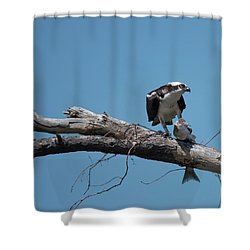 Osprey And Fish Shower Curtain