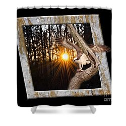Osprey At Sunset  Black Shower Curtain by Donna Brown