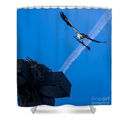 Osprey Carrying Stick To Nest Shower Curtain