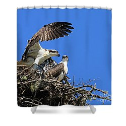 Osprey Chicks Ready To Fledge Shower Curtain by Debbie Stahre