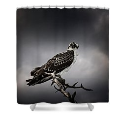 Osprey Shower Curtain by Chrystal Mimbs