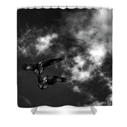 Osprey Dog Fight In Black And White Shower Curtain