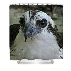 Osprey Portrait Shower Curtain