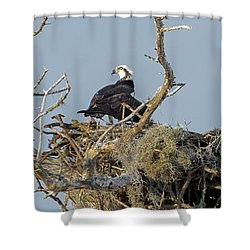 Osprey Family Shower Curtain