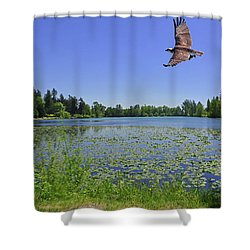 Osprey Fishing At Wapato Lake Shower Curtain
