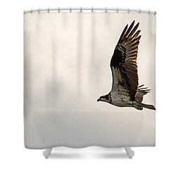 Osprey Fly By Shower Curtain