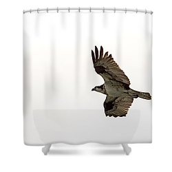 Osprey Full Spread Shower Curtain