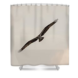 Osprey Head On Shower Curtain