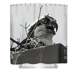 Osprey In Nest Shower Curtain