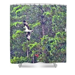 Osprey In Rain Shower Curtain