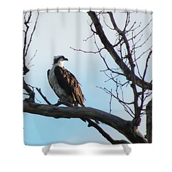 Osprey In Tree Shower Curtain
