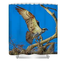 Osprey Landing On Branch Shower Curtain