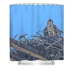 Osprey Nest Shower Curtain by Billie-Jo Miller