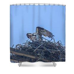 Osprey Nest II Shower Curtain by Billie-Jo Miller