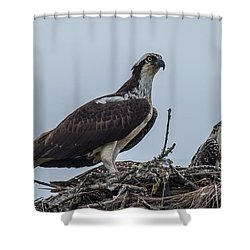 Osprey On A Nest Shower Curtain