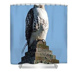 Red Shoulder Hawk On A Post Shower Curtain