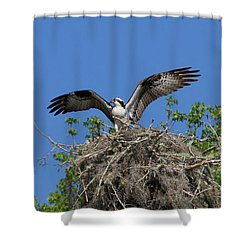 Osprey On Nest Wings Held High Shower Curtain