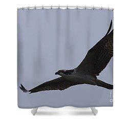 Osprey On The Tygart Shower Curtain by Randy Bodkins