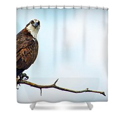 Shower Curtain featuring the photograph Osprey Out On A Limb by AJ Schibig