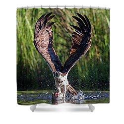 Osprey - Strike Shower Curtain