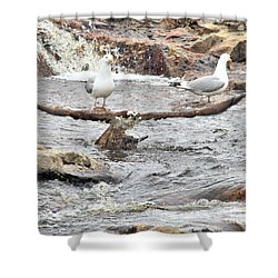 Shower Curtain featuring the photograph Osprey Takes Fish From Gulls by Debbie Stahre
