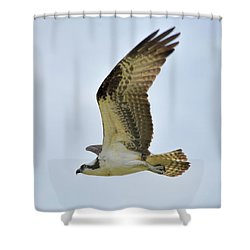 Osprey Upswing Shower Curtain