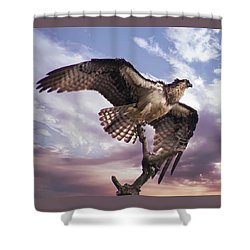 Osprey Wing Shower Curtain
