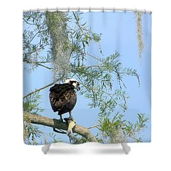 Osprey With A Fish Shower Curtain