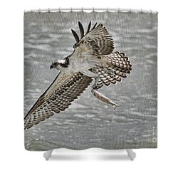 Osprey With Breakfast Shower Curtain by Deborah Benoit