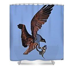 Osprey With Fresh Catch Shower Curtain