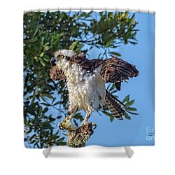 Osprey With Meal Shower Curtain