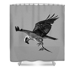 Osprey With Prey Shower Curtain
