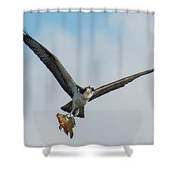 Osprey With Rainbow Bass 1 Shower Curtain