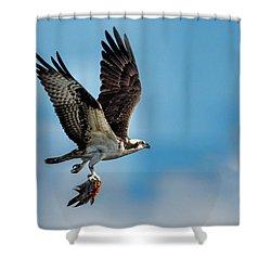 Osprey With Rainbow Bass 2 Shower Curtain