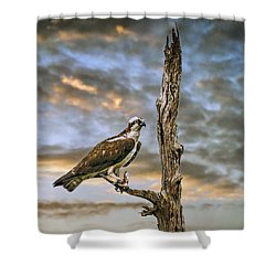 Shower Curtain featuring the photograph Osprey With Supper by Brian Tarr